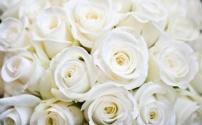 Розы. Высадка в открытый грунт и уход