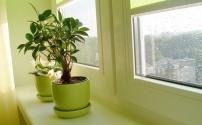 Почему важно иметь комнатные растения в доме