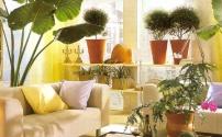 Как украсить дом цветами?