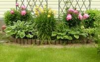 Самые неприхотливые растения для сада