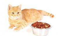 Как правильно переводить кота на новый корм