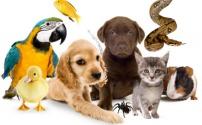 Захоронение домашних животных